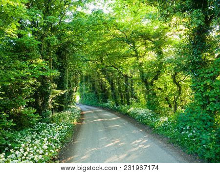 Trees and bushes over a rural road forming a tunnel in Southern England