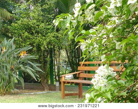 Wooden Bench In The Shade, At The Bottom Of The Garden, Surrounded By Flowers And Green Forest, In S