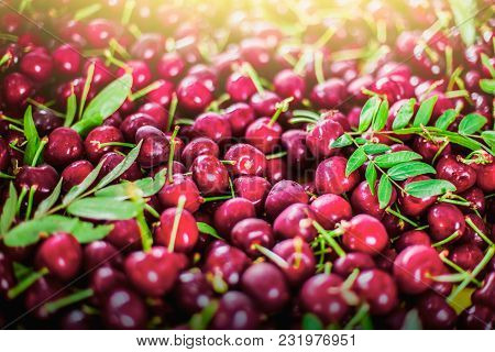 Beautiful Tasty Red Berries With Green Leaves