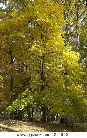 Autumn Colors In Prospect Park
