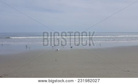 Numerous Gulls Standing In The Surf Along The Shore Of The Atlantic Ocean
