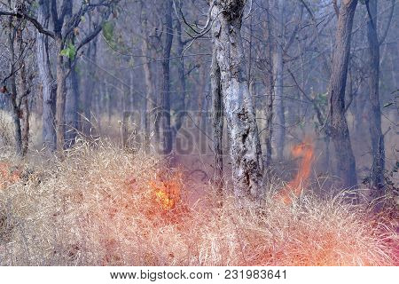 Forest Fire In The Drought Of Thailand Begin From Dry Grass