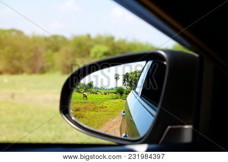 The Green Farm With Many Cows And Oxen Beside The Dirt Road From The Reflection In Left Side Mirror