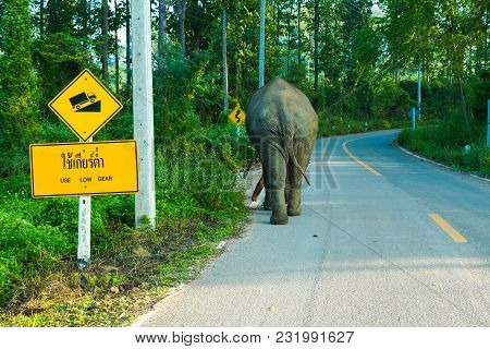 Elephant Walking Lonely On Up Hill Country Road With Up Hill Trafic Sign In Rural Of Thailand
