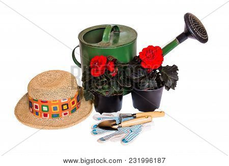 Green Watering Can, Hat, Seedlings Begonia Flowers And Gardening Tools Isolated On White Background