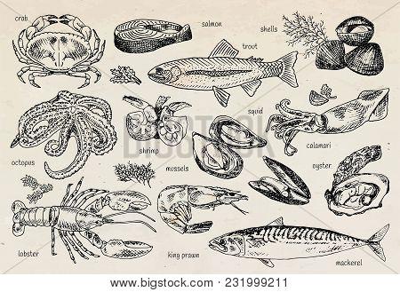 Seafood Menu, Octopus, Mussels, Lobster, Trout, Shells, Mackerel, Crab, Oyster, King Prawns, Shrimps