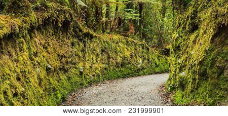 Colorful Fresh Bright Green Moss Passage In The Park, Lichen Walkway Walking Trail Route In Lake Mat