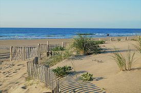 Stone Harbor Dunes. A Quiet Early Morning Scene Of Dunes Leading To The Beach In Stone Harbor Before