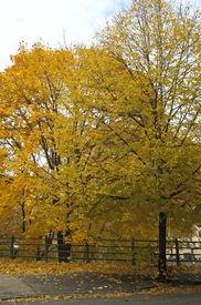 Fall Colors In Brooklyn