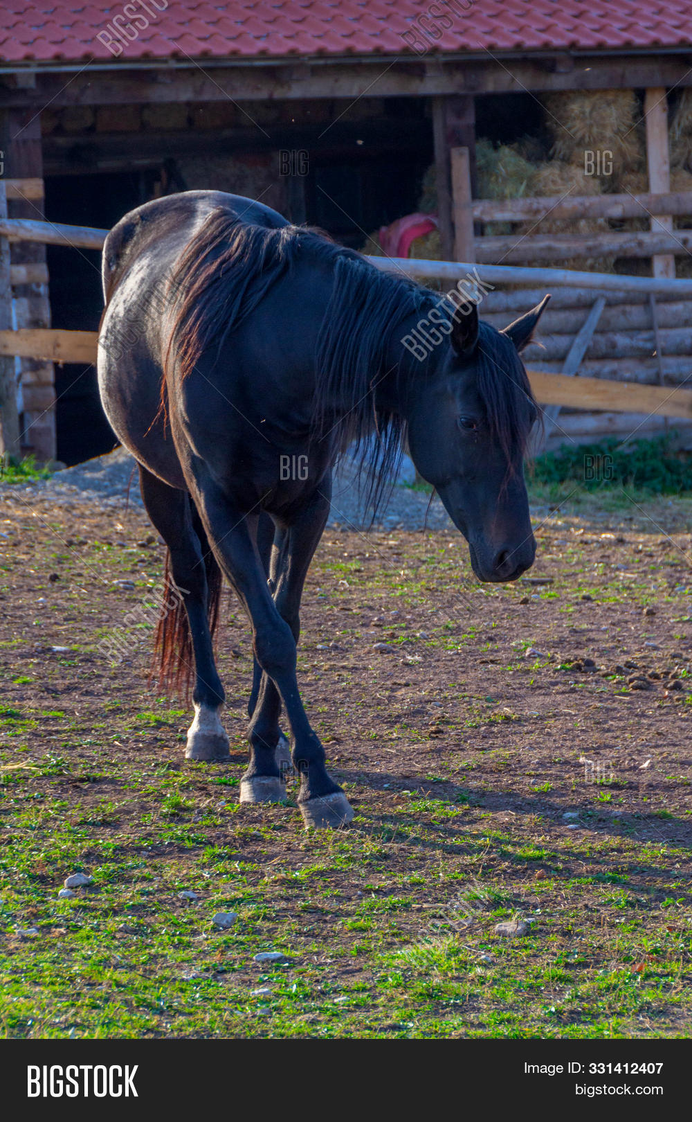 Beautiful Black Horse Image Photo Free Trial Bigstock