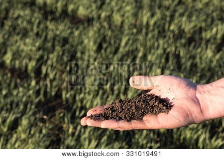 Soil On An Open Palm On The Background Of A Sown Field With Young Plants. Soil Testing In Agricultur