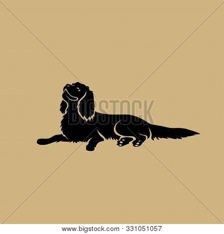Cavalier King Charles Spaniel Dog - Isolated Vector Illustration