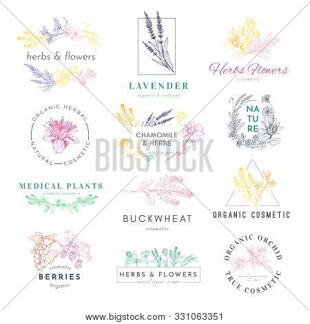 Cosmetic Products Logo Hand Drawn Vector Set. Medical Plants, Lavender, Buckwheat Illustrations With