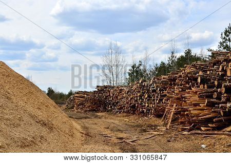 poster of Stack of cut pine tree logs in a forest. Wood logs, timber logging, industrial destruction, forests Are Disappearing, illegal logging