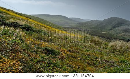Kehoe Beach Trail Eastbound In The Spring At Point Reyes National Seashore, Marin County, Usa,  Feat