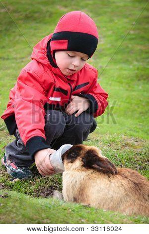 Little boy feed a rabbit