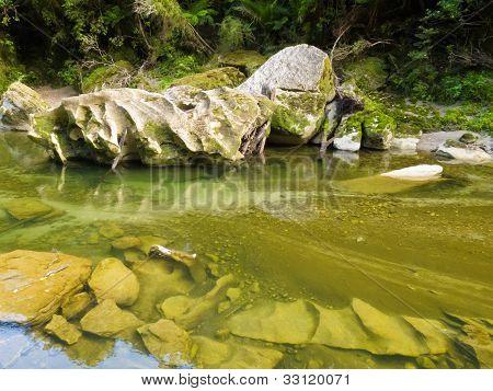 Lush green rainforest along Pororai River, NZ