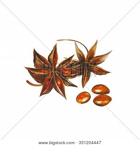 Badyan (illicium Verum), Dry Brown Star Anise Fruit, Watercolor Illustration, Isolated On White Back