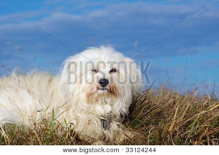 Dog looks into camera
