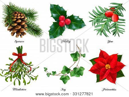 Plants, Christmas Decorations. Spruce, Holly, Yew, Mistletoe, Ivy, Poinsettia. 3d Realistic Vector S