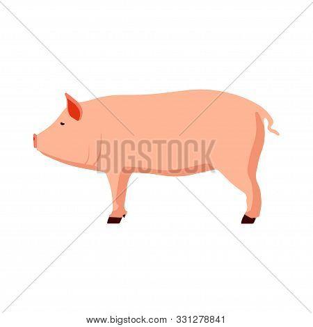 Animal Pink Pig Vector Illustration Side View Cartoon Design. Cute Art Farm Piglet Graphic Sign. Pig