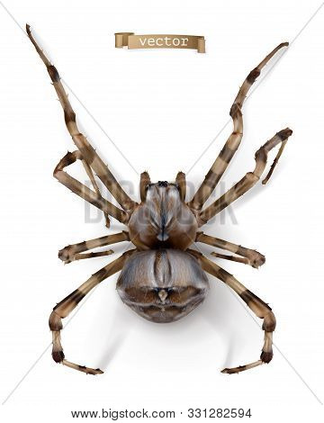 Spider. 3d Realistic Vector Icon On White Background