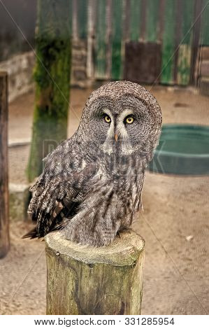Save A Bird, Save Yourself. Cute Owl Bird With Large Eyes And Hawk Beak. Owl Bird Perched In Zoo Cag