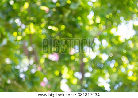 Ground View Of Blurry Foliage With Sunlight