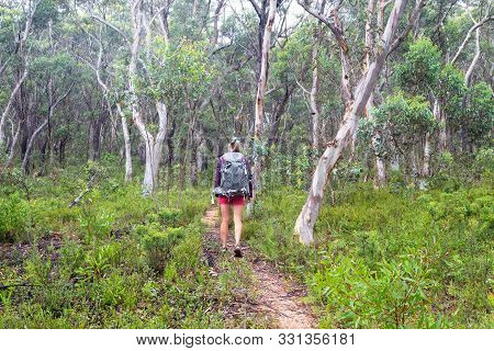 Woman Hiking On A Trail Through A Woodlkand Forest Of Gum Trees And Eucalypts, Their Sweet Smell Fra
