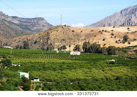 Elevated View Of Citrus Fruit Fields With Views Towards The Mountains, Alora, Malaga Province, Andal