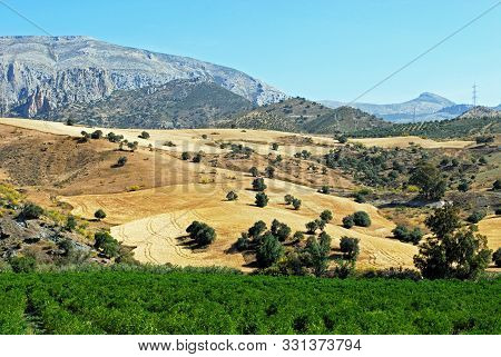 Elevated View Across Citrus Fruit And Wheat Fields Towards The Mountains, Alora, Malaga Province, An