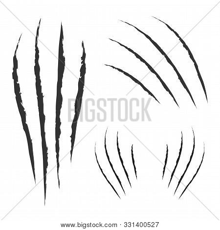 Black Claws Animal Scratch Scrape Track. Cat Tiger Scratches Paw Shape. Four Nails Trace. Funny Desi