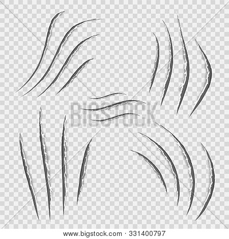 Black Realistic Claws Animal Scratch Scrape Track. Cat Tiger Scratches Paw Shape. Four Nails Trace.