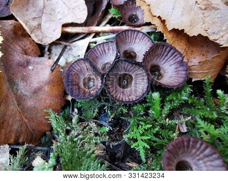 Strange Mushrooms, Toadstools, Growths. Photo Autumn Forest