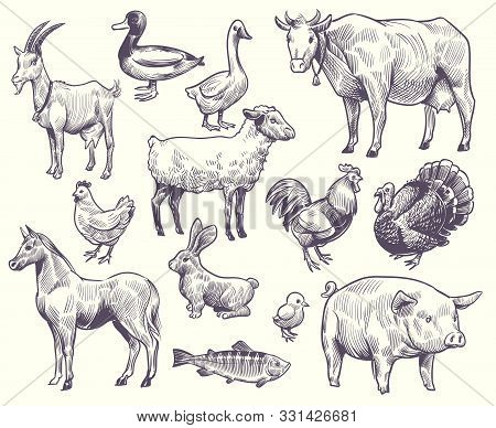 Hand Drawn Farm Animals And Birds. Goat, Duck And Horse, Sheep And Cow, Pig And Rooster, Rabbit And