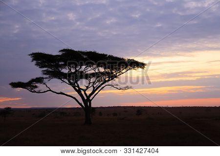 Dawn At Serengeti National Park, Tanzania, Africa. African Panorama