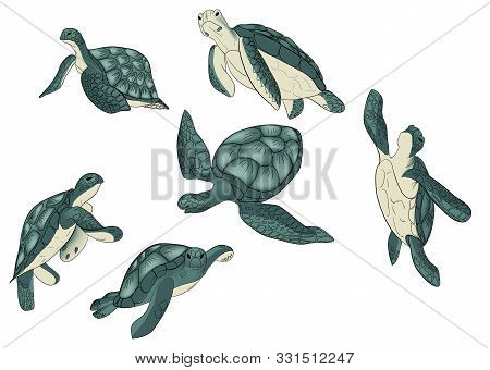 Vector Set Of Color Sea Turtle Isolated White Background