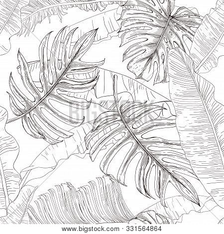 Black White Drawing Vector Photo Free Trial Bigstock Tropical leaf drawing at getdrawings   free download. black white drawing vector photo