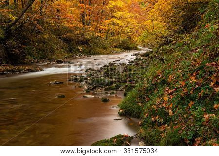 Autumn Colorful Landscape And Forest Stream. Beech Primeval Forests. Aomori, Japan.