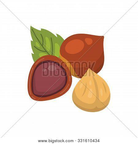 Hazelnut Vector Icon Nuts In Cartoon Style. Hazel Nut Food Collection.