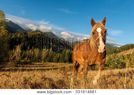 Brown Horse On A Pasture On A Background Of Mountains In The Morning