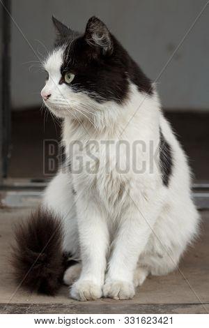 Yard Beautiful Cat Sitting On The Street