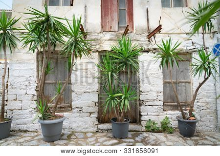 Rustic Old Wall And Door On Street Now Unused With Row Of Potted Trees With Long Stems And Long Gree