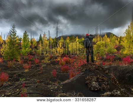 Tourist Photographer Takes Picture Autumn Landscape In Dead Forest Dead Wood - Consequence Of Natura