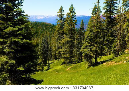 Lush Green Alpine Meadow Surrounded By A Temperate Pine Forest Taken At The Trinity Alps Wilderness
