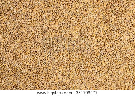 Close-up Of Uncooked Beige Pearl Barley Grains. Healthy Food Concept. Pearl Barley Pattern