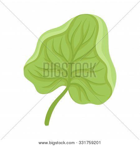 Waterlily Sepal With Leaf Venetion Flower Part Vector Illustration