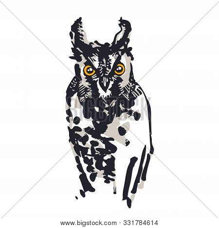 Long-eared Owl Illustration. Digitalized Sketches. Ink Brush-pen And Markers On Paper. Black, Greys