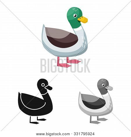 Vector Design Of Duck And Bird Symbol. Collection Of Duck And Drake Stock Vector Illustration.