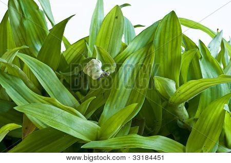 Bejing Grass
